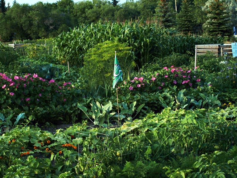 2009-08-10-yara-grcg-gardeners-005